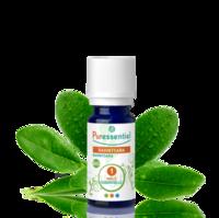 Puressentiel Huiles Essentielles - Hebbd Ravintsara Bio* - 5 Ml à NIMES
